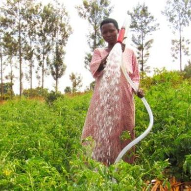 Influencing the design of the World Bank's smallholder farmer irrigation project in Rwanda